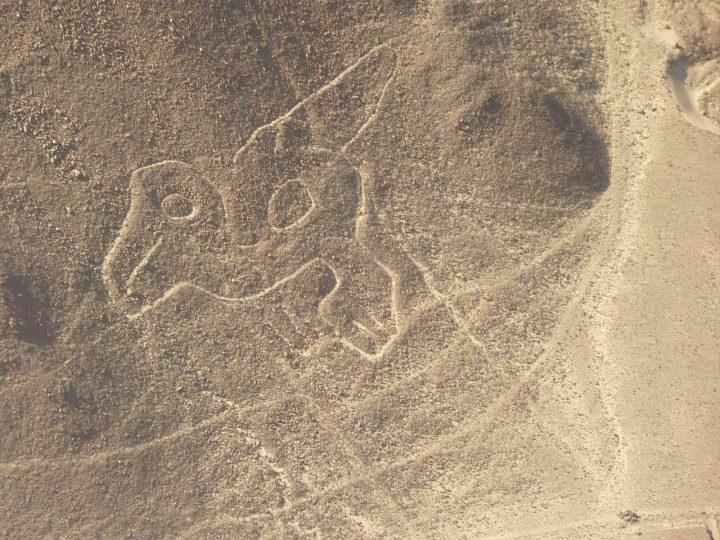 ナスカの地上絵生き物