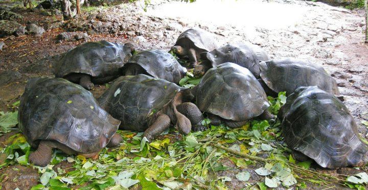 世界遺産・ガラパゴス諸島