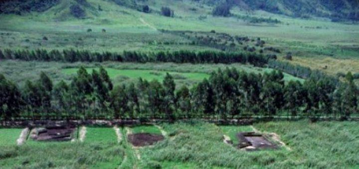 クックの初期農業遺跡