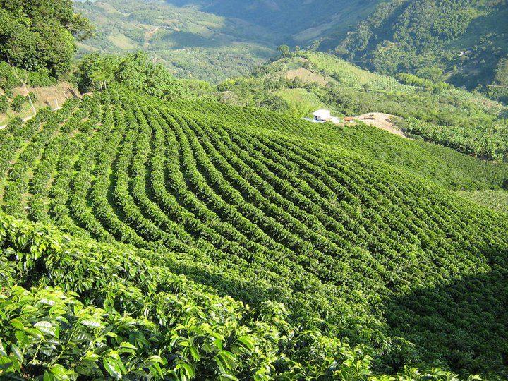 コロンビアのコーヒー産地の文化...