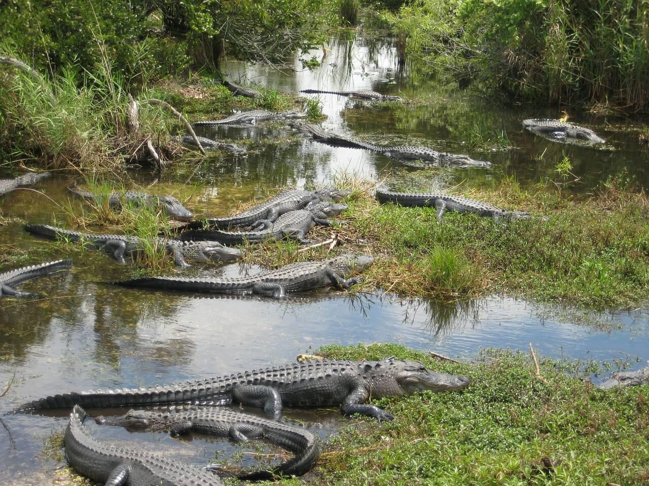 エバーグレーズ国立公園の画像 p1_31