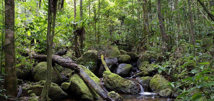 アツィナナナの雨林