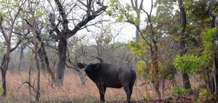 コモエ国立公園