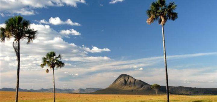 セラード保護地域:ヴェアデイロス平原国立公園とエマス国立公園