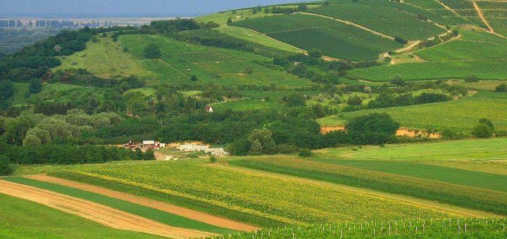 トカイワイン産地の歴史的文化的景観