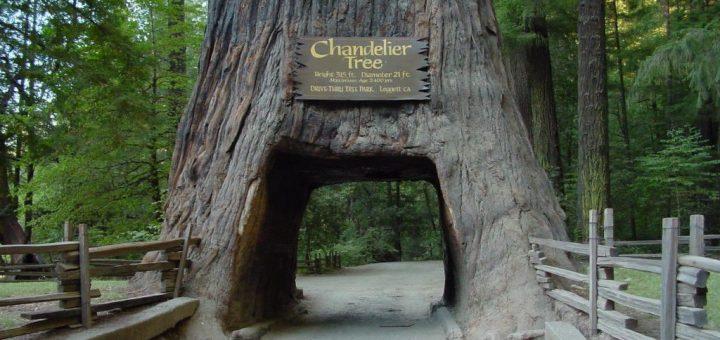 レッドウッド国立・州立公園