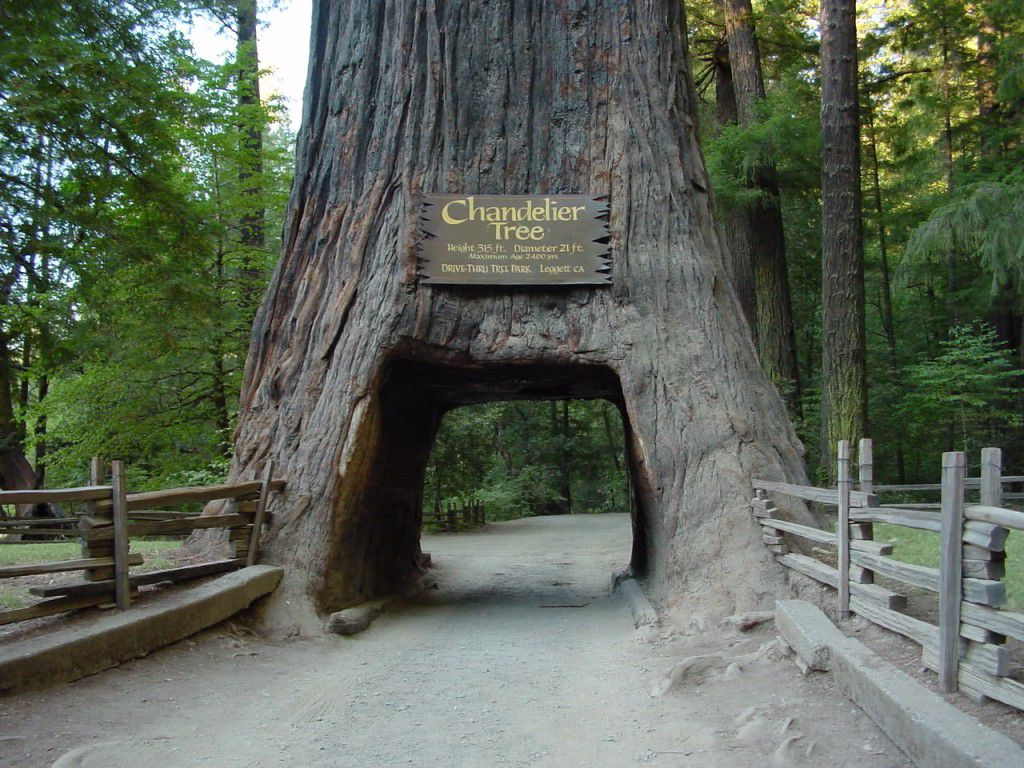 レッドウッド国立公園の画像 p1_24