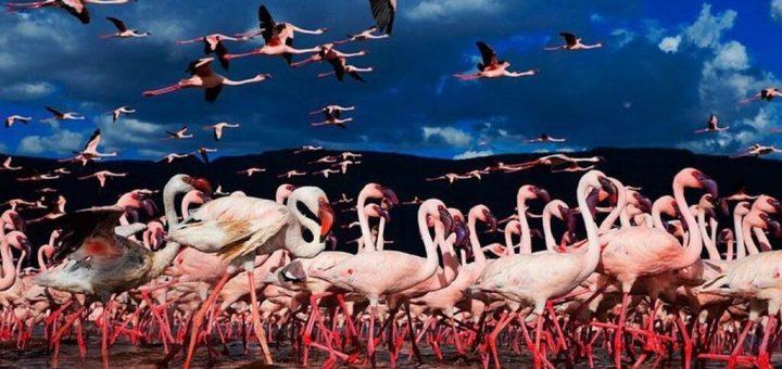 大地溝帯にあるケニアの湖沼群