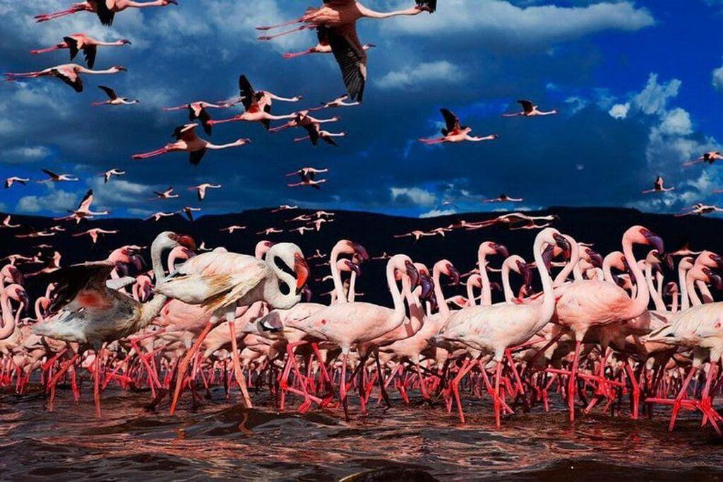 大地溝帯にあるケニアの湖沼群  世界遺産オンラインガイド