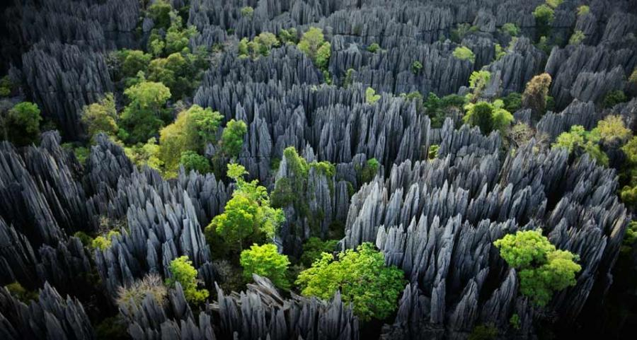 ツィンギ・デ・ベマラ厳正自然保護区の画像 p1_10