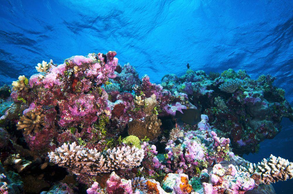 世界遺産オンラインガイド世界遺産オンラインガイドトゥバタハ岩礁自然公園