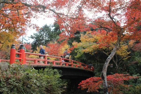 厳島神社・紅葉