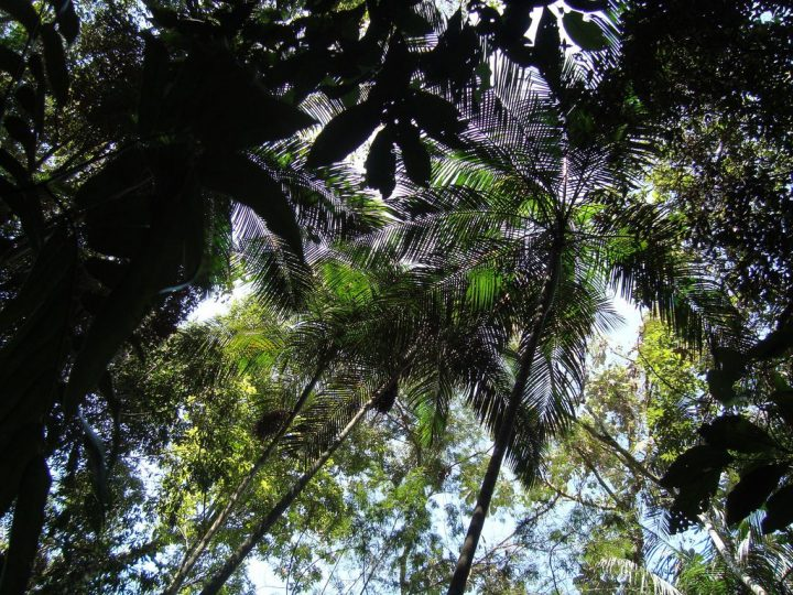 photo credit: tijuca forest/tijuca national park/tijuca peak via photopin (license)