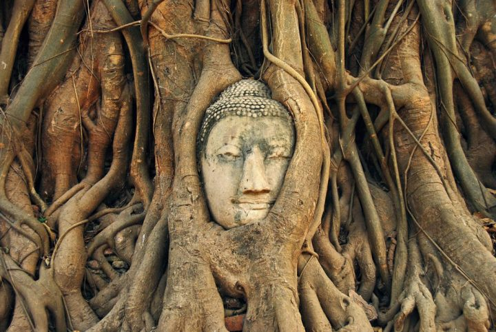 photo credit: Tree Root Buddha Head via photopin (license)