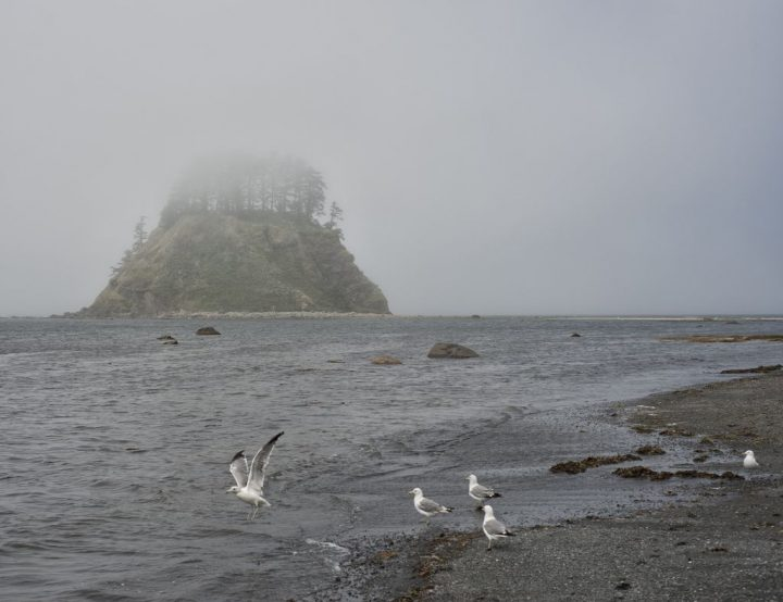 photo credit: Cape Alava via photopin (license)