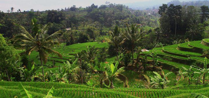 バリ州の文化的景観:トリ・ヒタ・カラナの哲学を表現したスバック・システム
