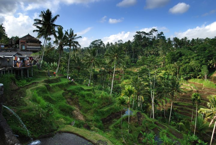 photo credit: Bali – Rice terrace via photopin (license)