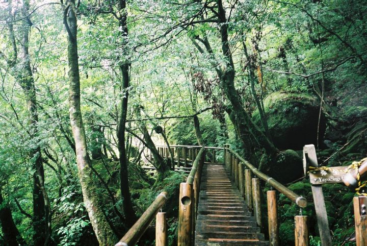 photo credit: 屋久島 (Yakushima) 12 via photopin (license)