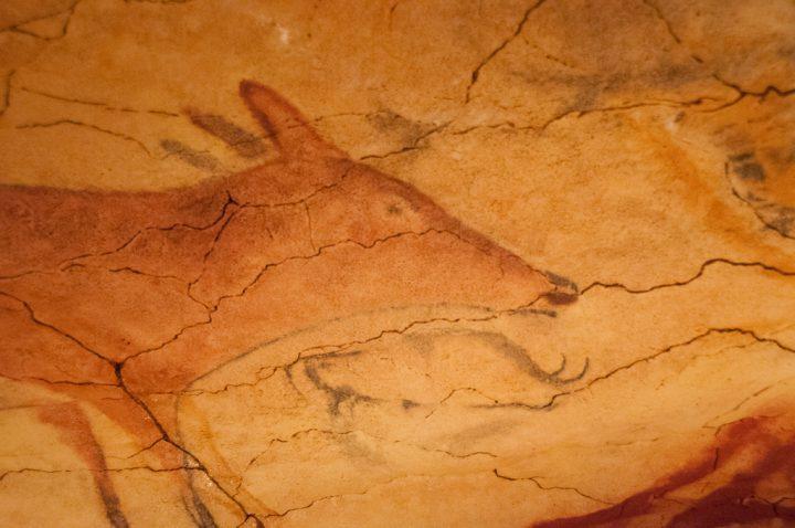 アルタミラ洞窟の画像 p1_21