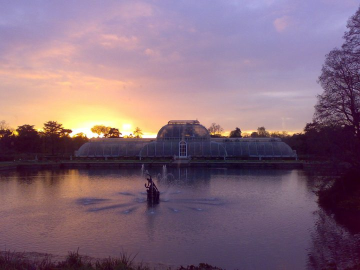 photo credit: Sunset at the Palm House via photopin (license)