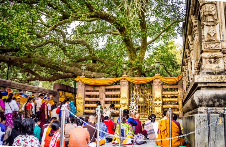 photo credit: 5th generation Bodhi Tree at Bodh Gaya via photopin (license)
