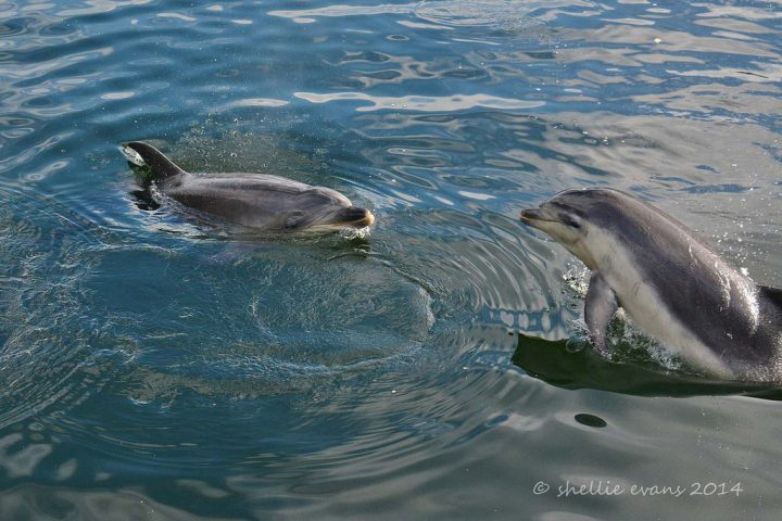 photo credit: Doubtful Sound Dolphins, NZ via photopin (license)