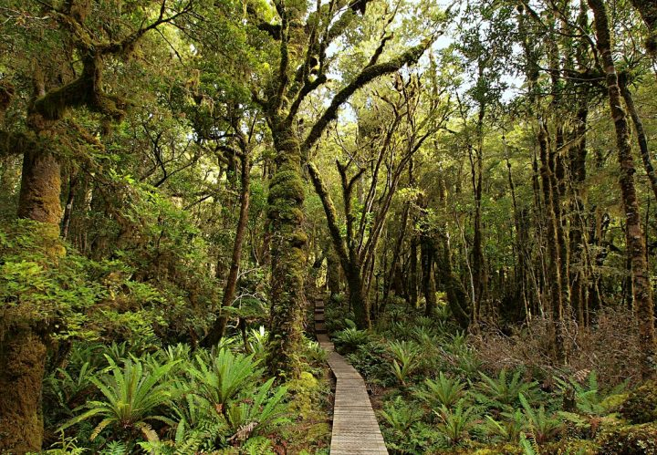 photo credit: Beech forest and boardwalk via photopin (license)