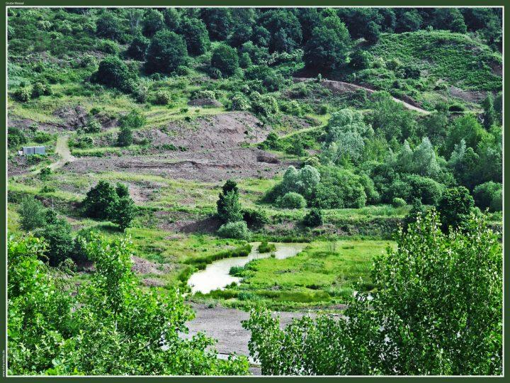 メッセル採掘場の画像 p1_5