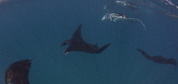 サンガネブ海洋国立公園とドゥンゴナブ湾=ムッカワル島海洋国立公園