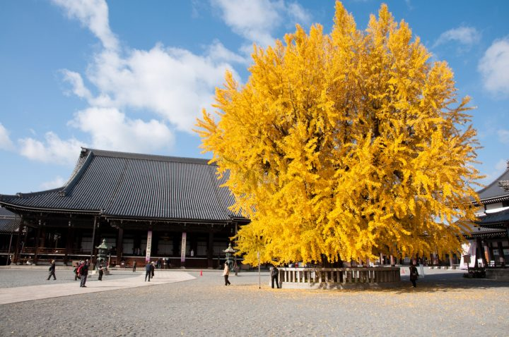 photo credit: 西本願寺 via photopin (license)