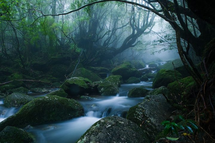 photo credit: Mononoke forest, Yakushima island via photopin (license)