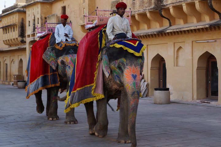 photo credit: JULIAN MASON Elephants at The Amber Palace, Amer, Jaipur, Rajasthan, India - DSC03660 via photopin (license)