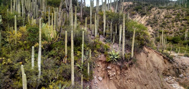 テワカン=クイカトラン渓谷:メソアメリカの固有生息地