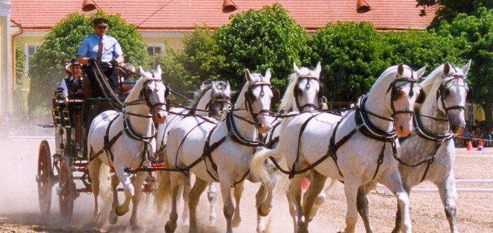 クラドルビ・ナト・ラベムの儀礼用馬車馬の繁殖・訓練の景観