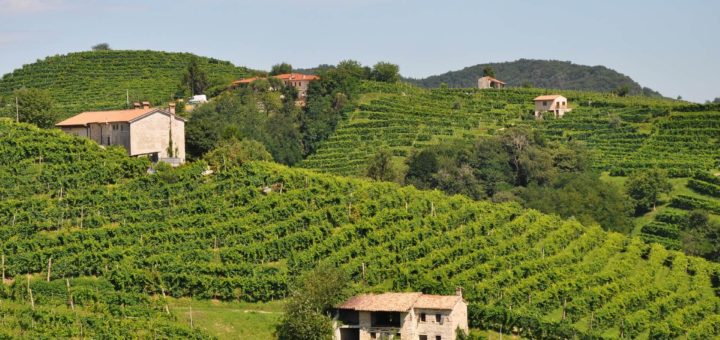 コネリアーノとヴァルドッビアーデネのプロセッコ栽培丘陵群