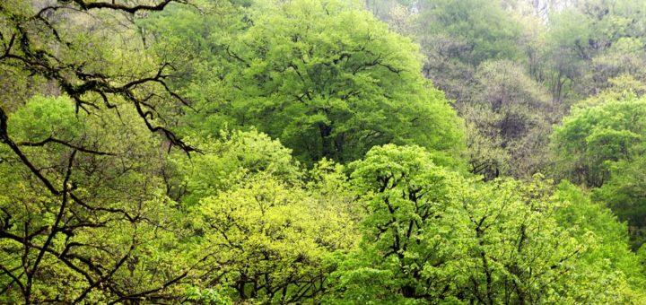ヒルカニアの森林群